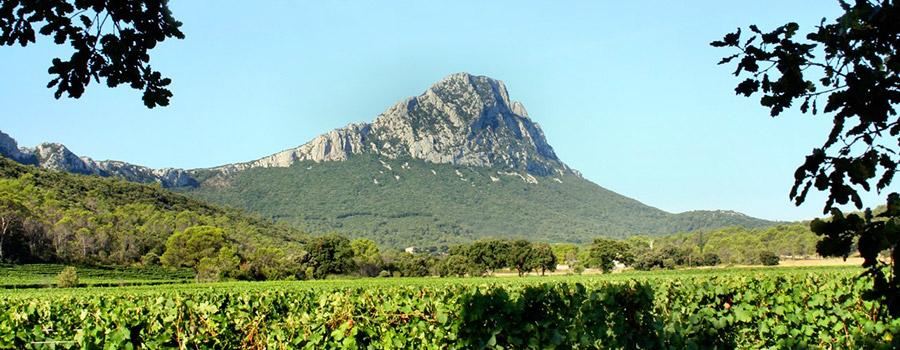 Bergerie du Capucin wineyard