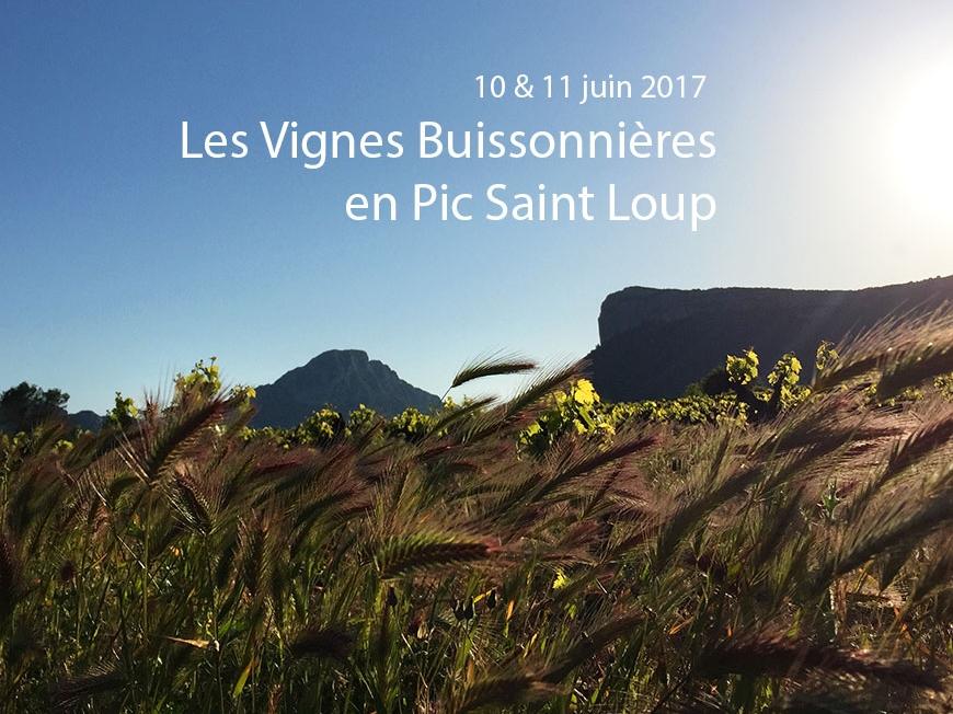 Vignes buissonnières 2017 in Pic Saint Loup
