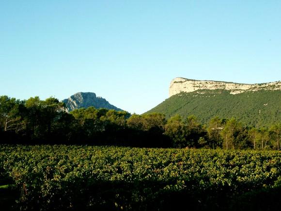 Press release on Les Vigne Buissonnières en Pic Saint-Loup on IN VINO VERITAS website